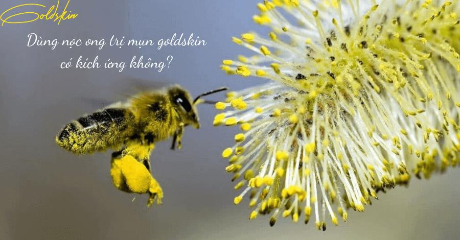 Dùng nọc ong trị mụn goldskin có kích ứng không?
