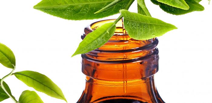 tinh dầu trà kháng khuẩn và trị mụn hiệu quả tại nhà