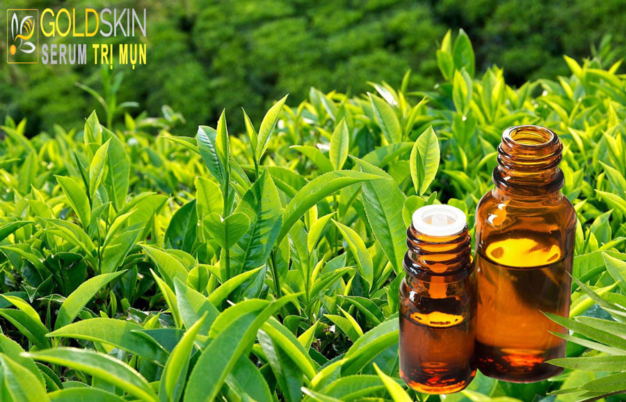 Đặc tính chống viêm của tinh dầu cây trà đem đến lợi ích tuyệt vời